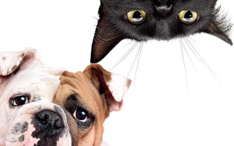 Gato y perro 12