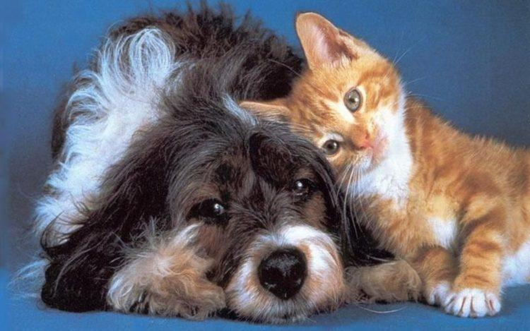 Gato y perro 18