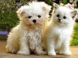 Gato y perro 4