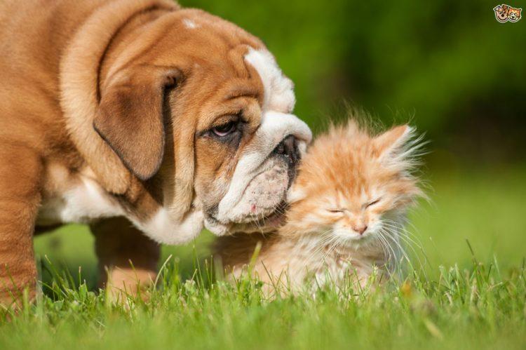 Gato y perro 5