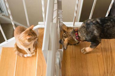 Gato y perro 7