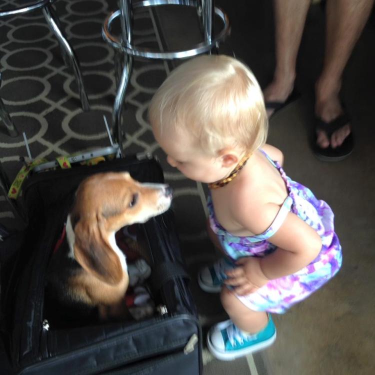 Howie-Beagle 2