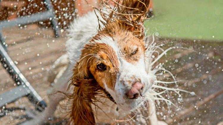 Mascotas-golpe-de-calor 1