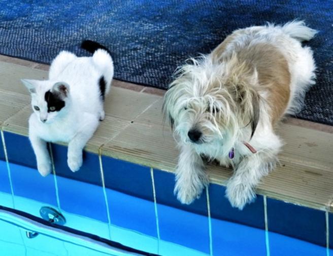 Mascotas-golpe-de-calor 3