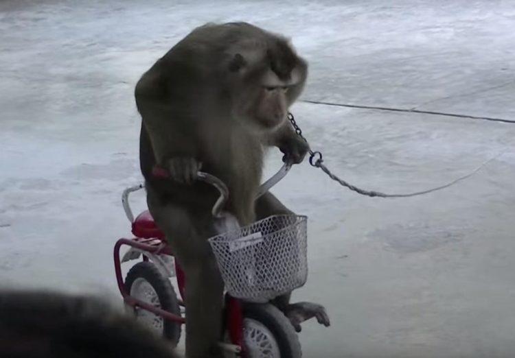 Mono-encadenado 1