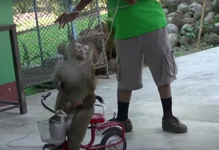 Mono-encadenado 2