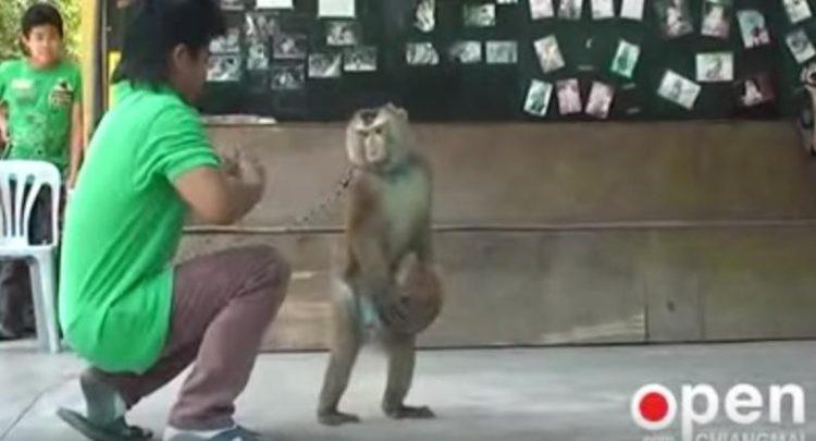Mono-encadenado 4