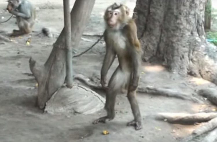 Mono-encadenado 6