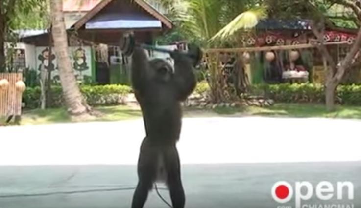 Mono-encadenado 7