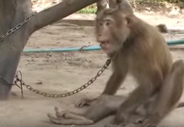 Mono-encadenado 8