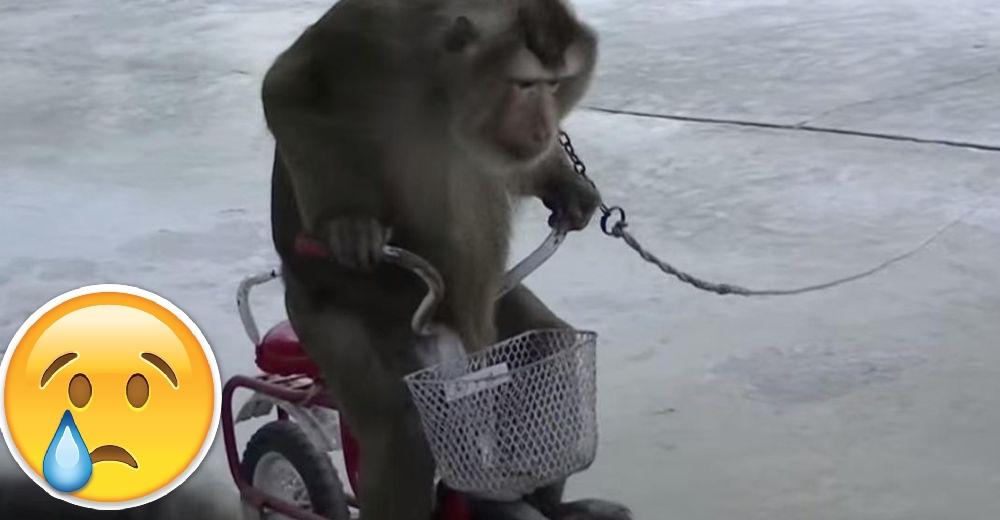 Mono-encadenado-portada