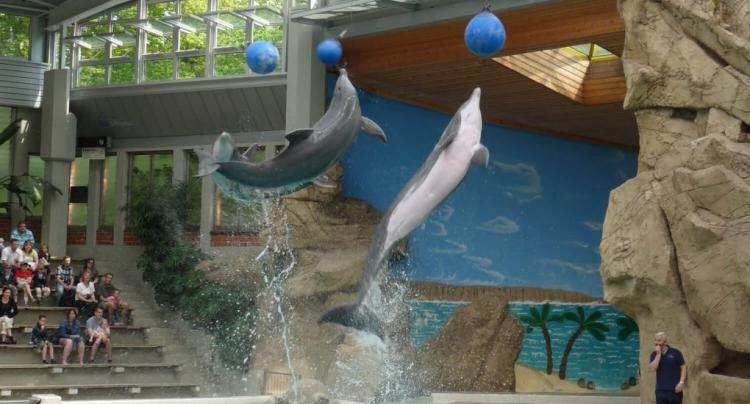 Nadar-con-delfines 2