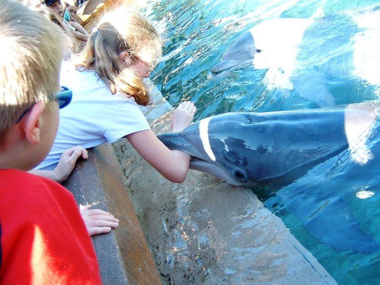 Nadar-con-delfines 5