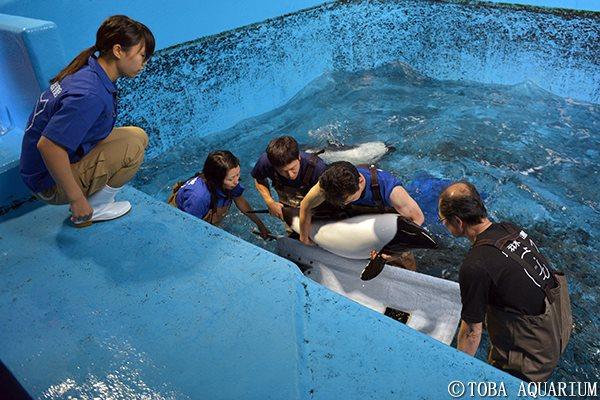 Nadar-con-delfines 6