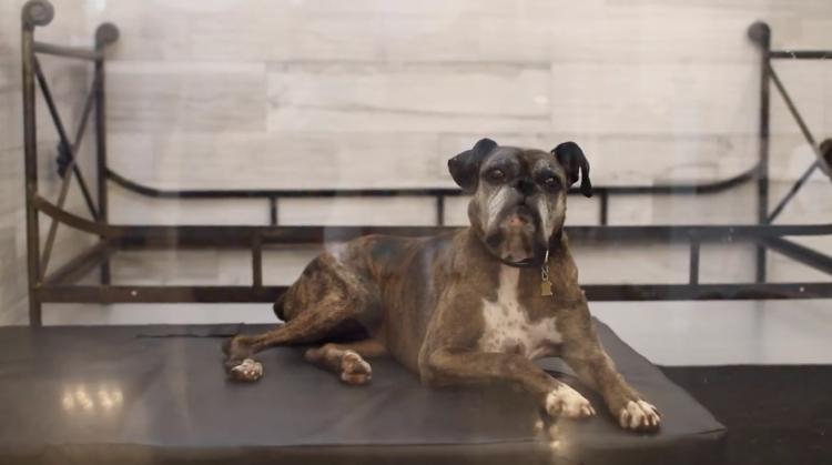 Padre-perro-adoptar 5