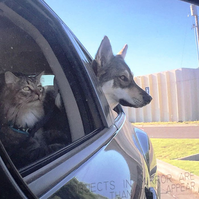 Perrito escogio a su propio gatito 1