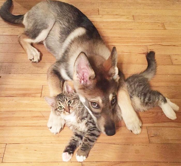 Perrito escogio a su propio gatito 2