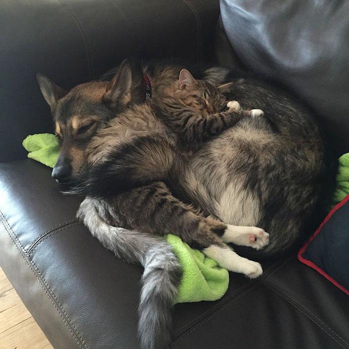 Perrito escogio a su propio gatito 7