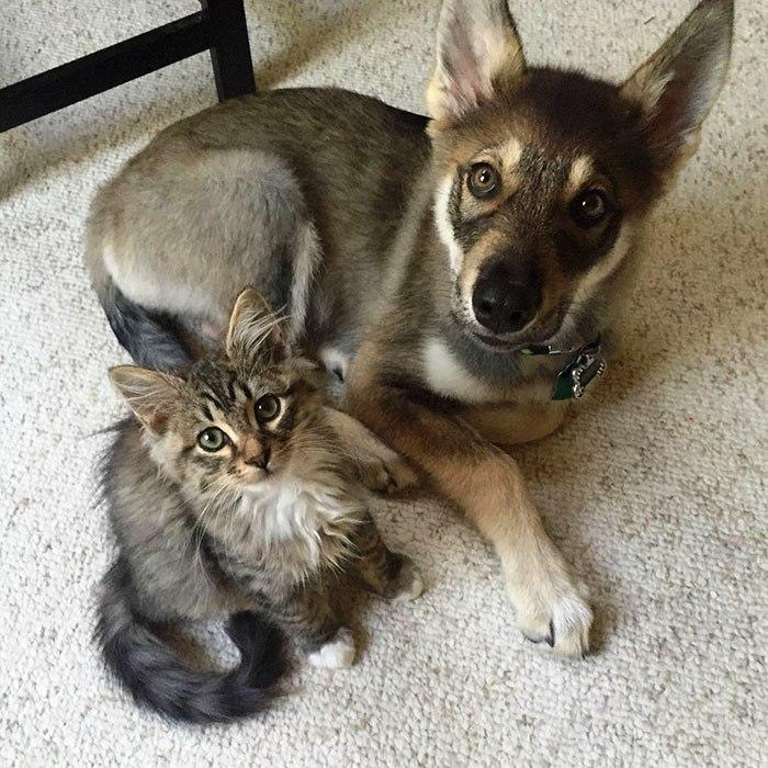 Perrito escogio a su propio gatito 8