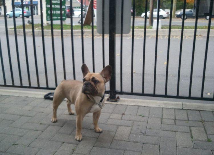 Perro-atado 1