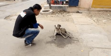 Perro de la calle 1
