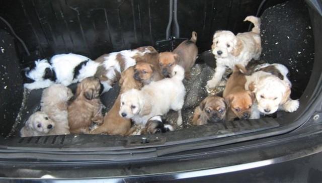 Perros-encontrados-baul 1