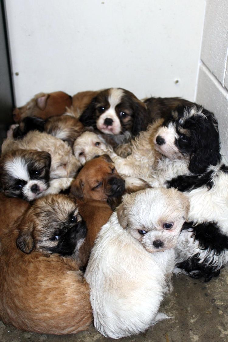 Perros-encontrados-baul 2