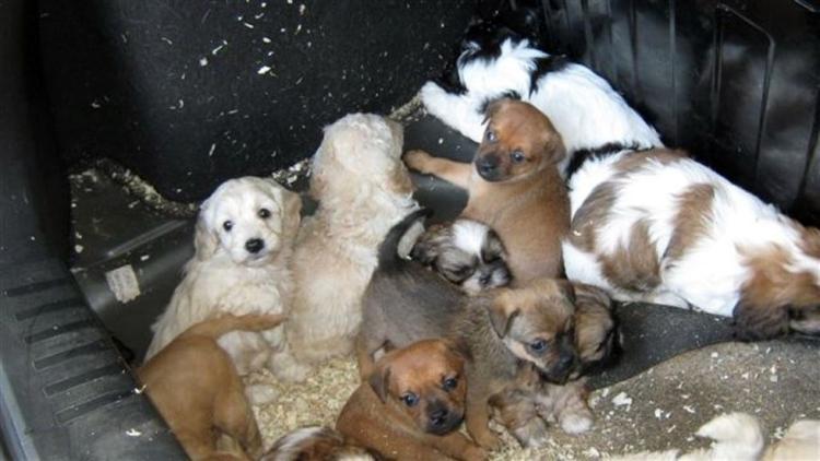 Perros-encontrados-baul 3