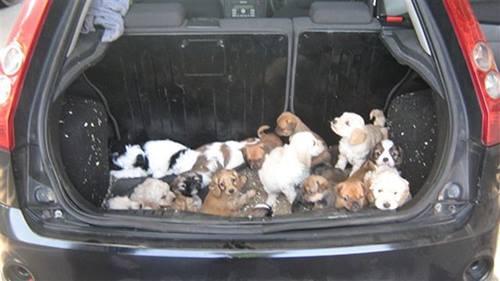 Perros-encontrados-baul 6
