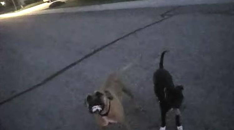 Perros-rabiosos-policia 2
