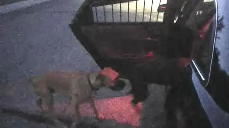 Perros-rabiosos-policia 3