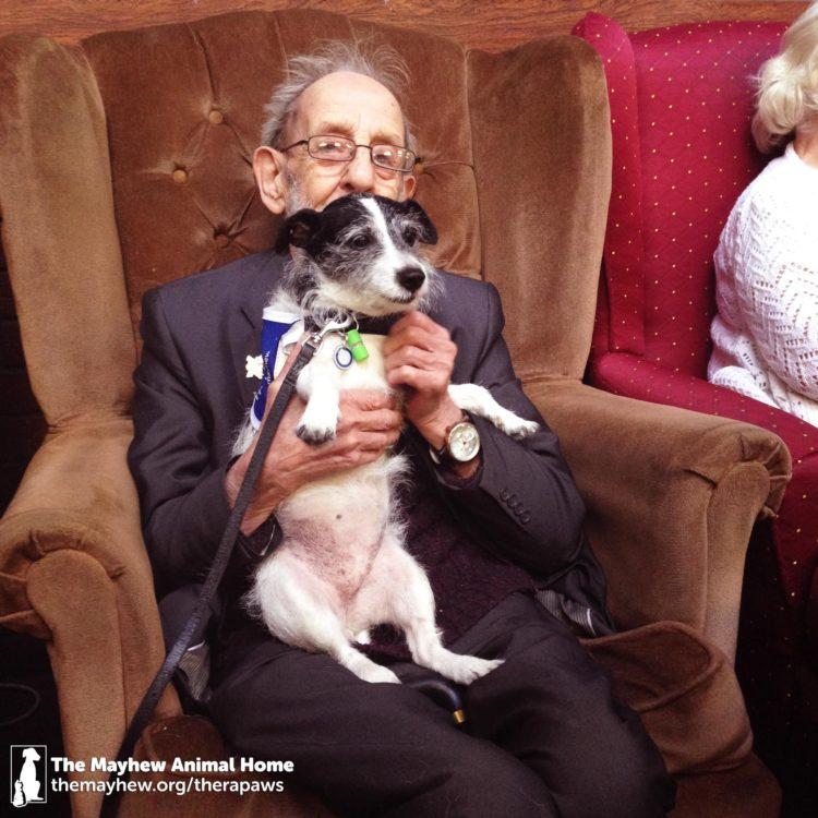 Perros-terapeuticos-ancianos 2
