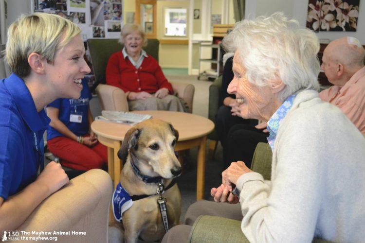 Perros-terapeuticos-ancianos 4