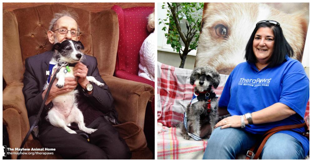 Perros-terapeuticos-ancianos-portada