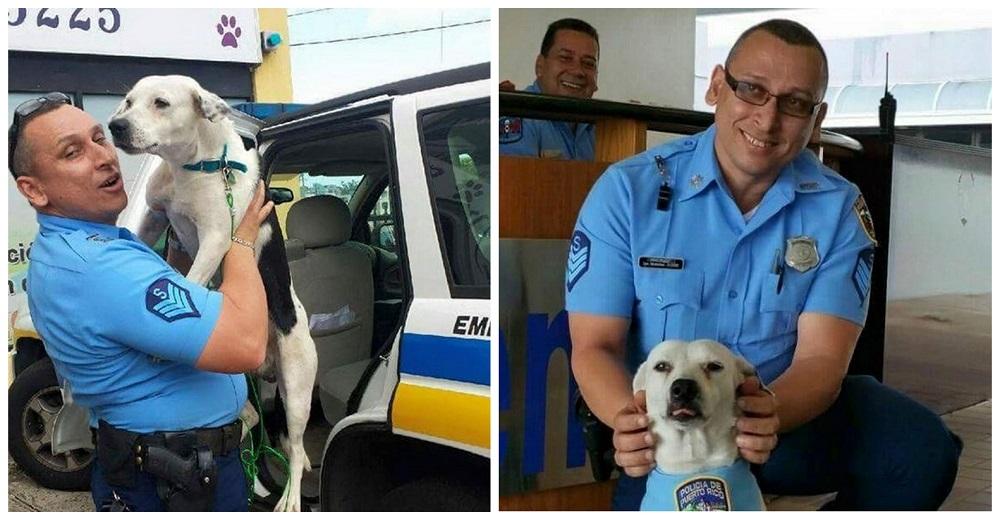 Portada perro abandonado Gorgi es ahora policía Puerto Rico