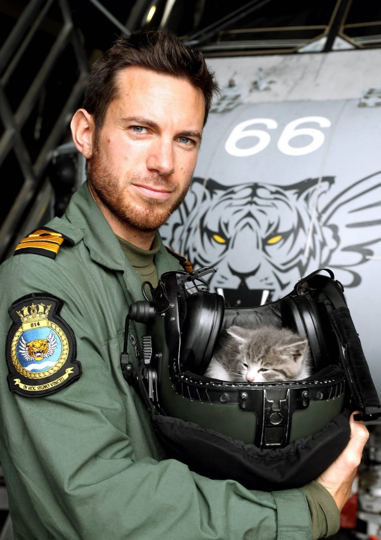 Tigger-Royal-Navy-gato 1