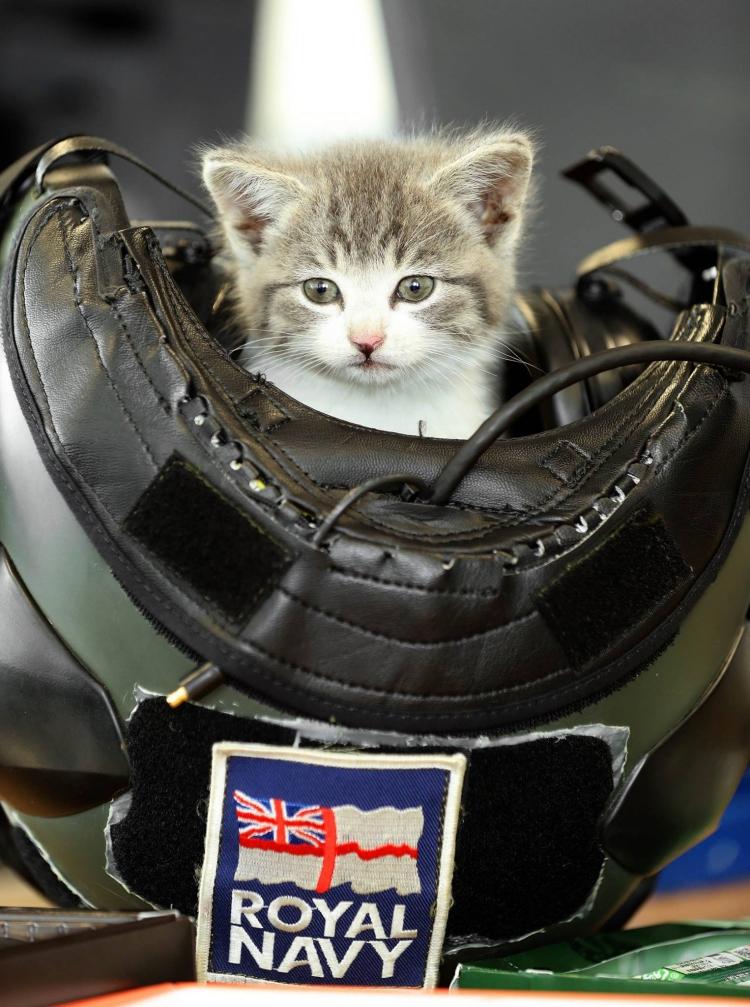 Tigger-Royal-Navy-gato 3