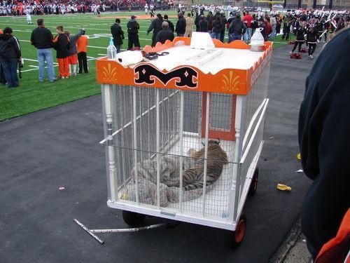 Tigre-mascota-futbol-americano 1