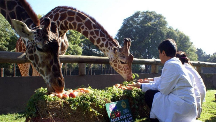 Zoologico-Bueno-Aires 1