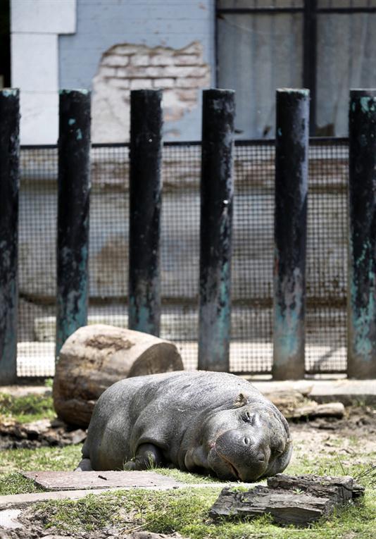 Zoologico-Bueno-Aires 18