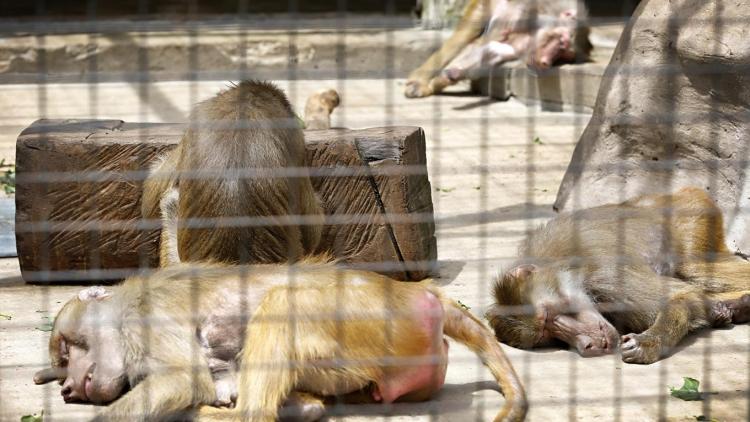 Zoologico-Bueno-Aires 22