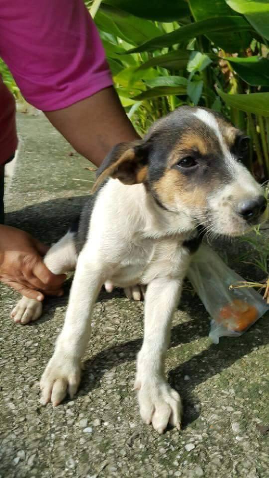 acto heroico niño rescata perrito en Malasia 3