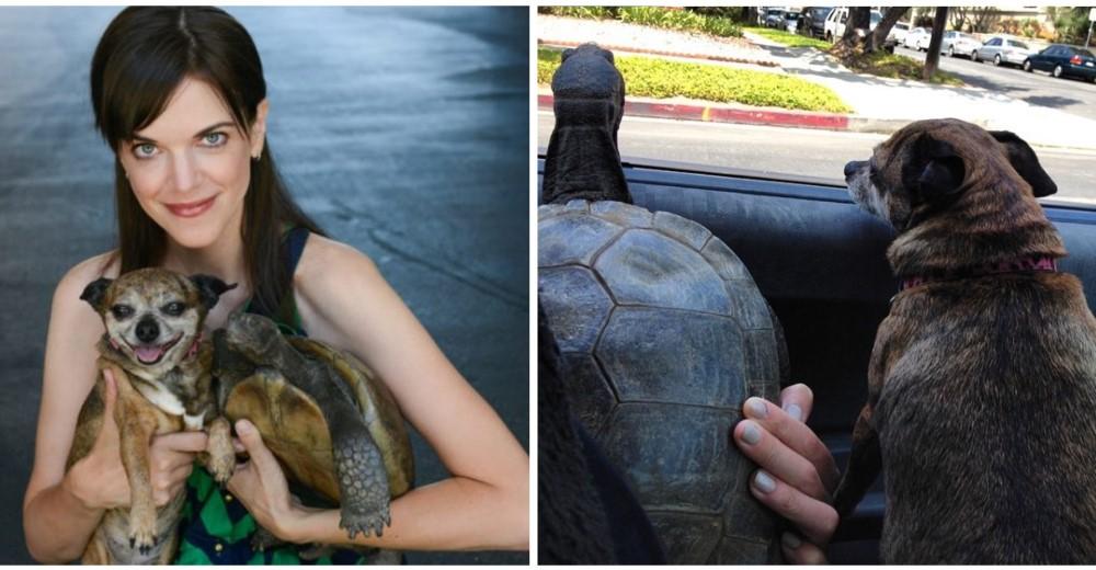 actriz-rescata-perro-y-tortuga