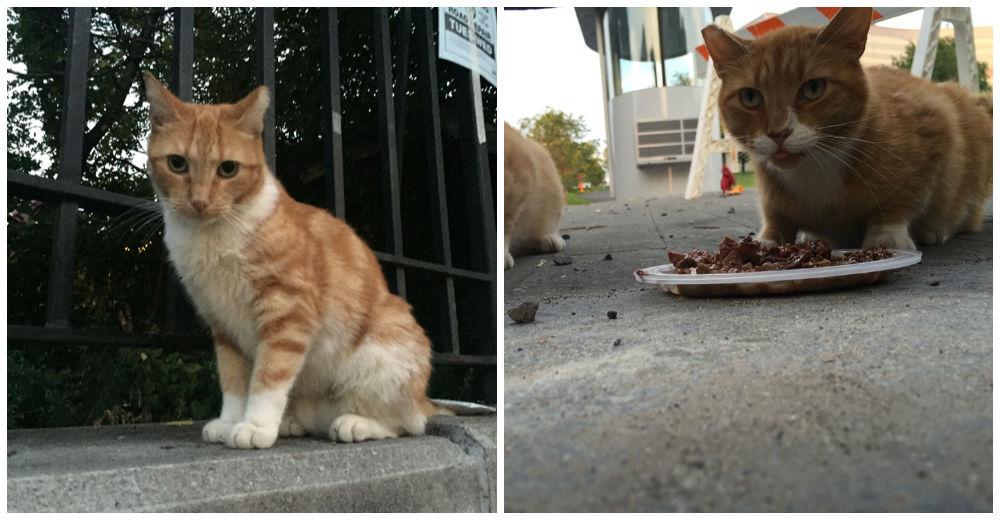 atrapar-gato-humanos