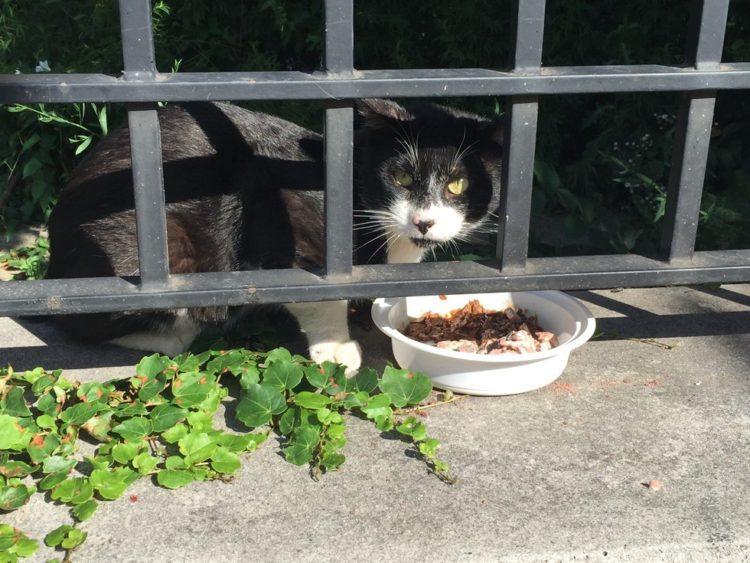 atrapar-gato-humanos1