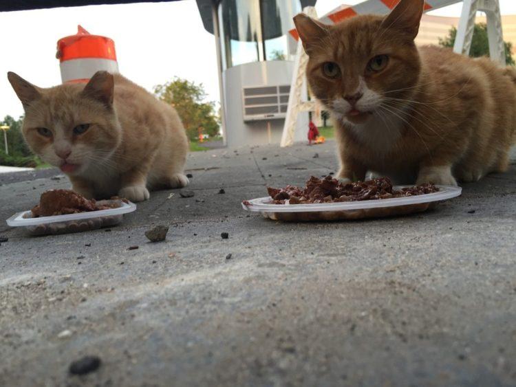 atrapar-gato-humanos2