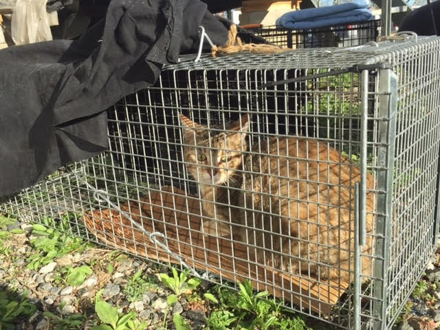 atrapar-gato-humanos9