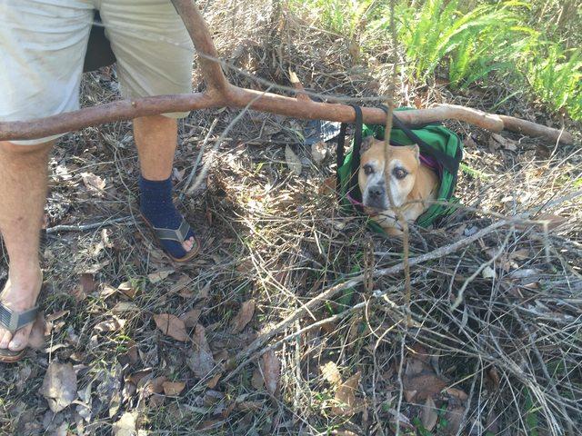 ayudando perro cansado 12