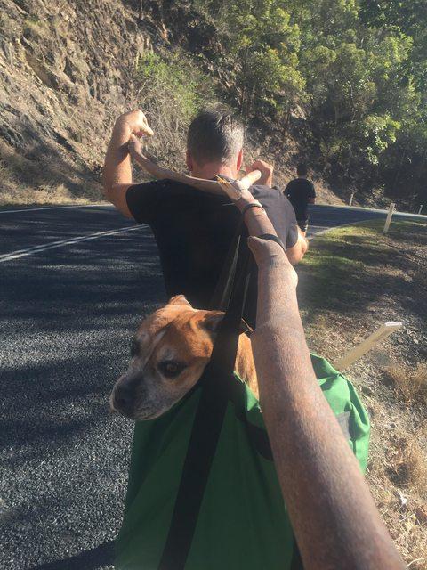 ayudando perro cansado 14