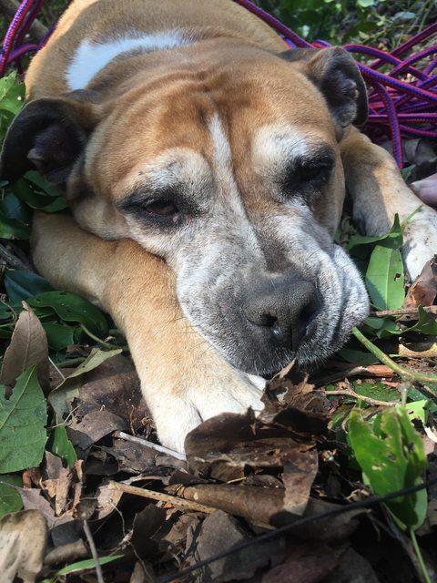 ayudando perro cansado 6